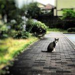 野良猫対策は結局チクチク猫よけシートが1番効果的っぽい