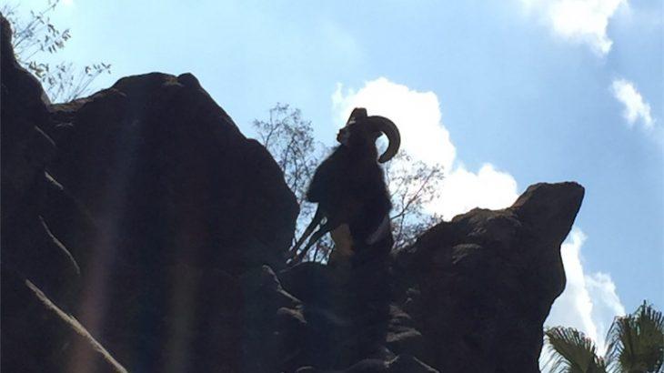 平日、子供と二人きりで日帰りプチ二人旅in天王寺動物園&あべのハルカス!